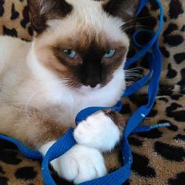 Becky Burt - Playful Blue Eyes Siamese