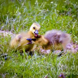 Kerri Farley - Playful Goslings