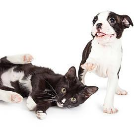 Playful Kitten and Puppy Playing - Susan Schmitz