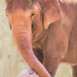 Daphne Sampson - Playtime For Elephant