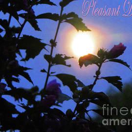 Gardening Perfection - Pleasant Dreams