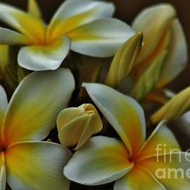 Craig Wood - Plumeria in Yellow and White