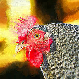 Tina  LeCour - Plymouth Barred Rock Portrait