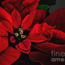 Lois Bryan - Poinsettia