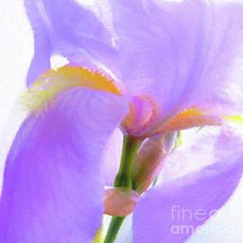 Scott Cameron - Pointillist Iris