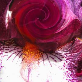 Brooks Garten Hauschild - Points of Light Iris