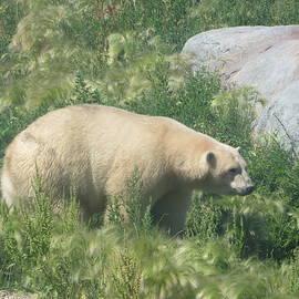 Manuel Matas - Polar Bear