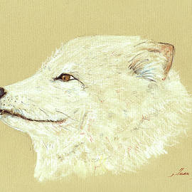 Polar fox portrait - Juan  Bosco