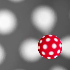Alapati Gallery - Polka dots