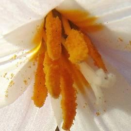 Honey Behrens - Pollen Princess