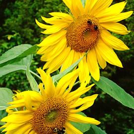 Natalie Holland - Pollinating