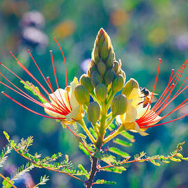 Ram Vasudev - Pollination