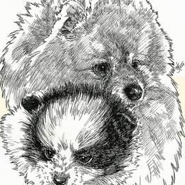 Barbara Keith - Pomeranian Father and Son