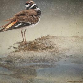 R christopher Vest - Pond Killdeer Study