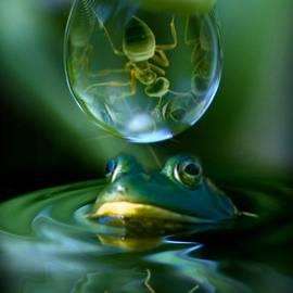 Kym Clarke - Pond Life