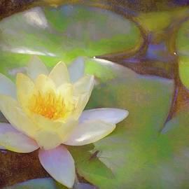 Pamela Cooper - Pond Lily 35