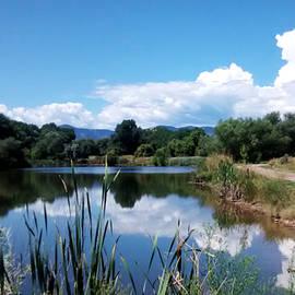 Gretchen Wrede - Pond Reflections at Bear Creek Trail Colorado