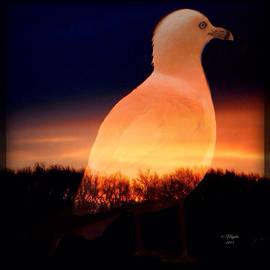 Majula Warmoth - Pondering Through Sunset