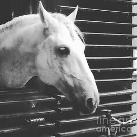 Donato Iannuzzi - Ponytail Horse