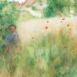 Poppies - Carl Larsson