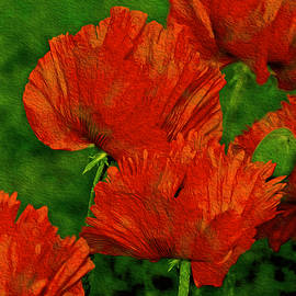 Lynda Lehmann - Poppies Defining Space v2