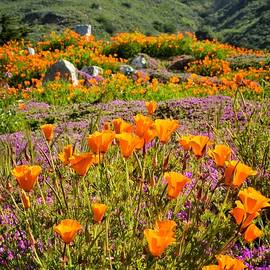 Lynn Bauer - Poppies on Pacific Coast Highway