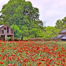 Bonnie Willis - Poppies on the Farm