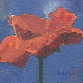 poppy - John Holdway