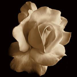 Jennie Marie Schell - Porcelain Sepia Rose Flower