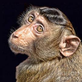 Jim Fitzpatrick - Portrait of a Baby Monkey II