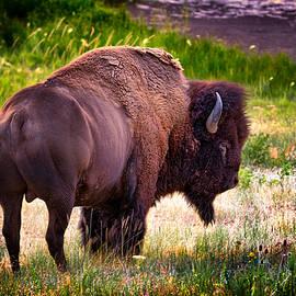 Renee Sullivan - Portrait of a Bison