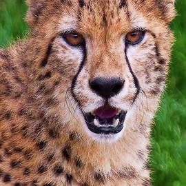 Marcia Colelli - Portrait of A Cheetah