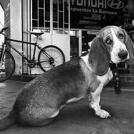 Daniel Gomez - Portrait of a Dog