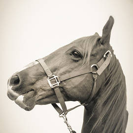 Kelly Hazel - Portrait of a Horse
