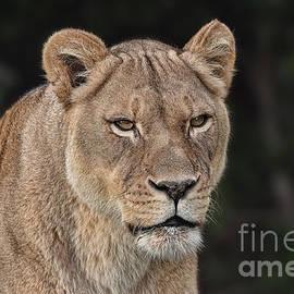 Jim Fitzpatrick - Portrait of a Lioness II
