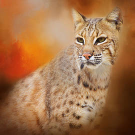 Lynn Bauer - Portrait of a Lynx