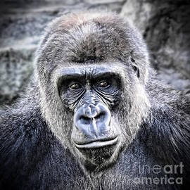 Jim Fitzpatrick - Portrait of a Male Ape