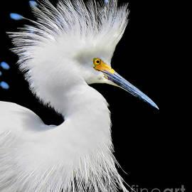 Jennie Breeze - Portrait of a Snowy White Egret