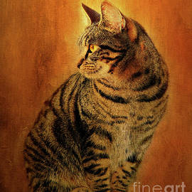 Kathy Franklin - Portrait of A Tabby Cat