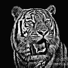 Jim Fitzpatrick - Portrait of a Tiger black and white