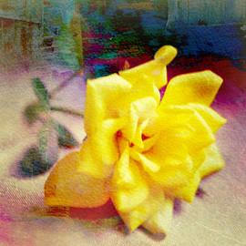 Kathy Bucari - Portrait of A Yellow Rose