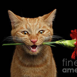 Sergey Taran - Portrait of ginger cat brought rose as a gift