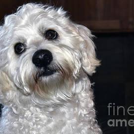 Beth Wolff - Portrait of Multipoo Dog