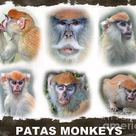 Jim Fitzpatrick - Portraits of Patas Monkeys