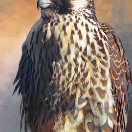 Regina Geoghan - Posing Peregrine Falcon