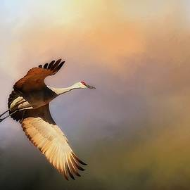 Flying Z Photography By Zayne Diamond - Power Stroke, Sandhill Crane, Bosque del Apache, New Mexico