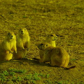 Jeff  Swan - Prairie Dog social gathering