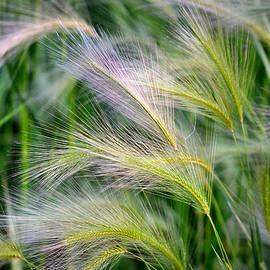 Deb Halloran - Prairie Wind