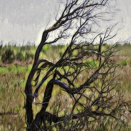 Jean OKeeffe Macro Abundance Art - Prairie Wind