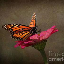 Judy Palkimas - Prefect Landing - Monarch Butterfly